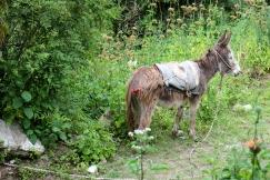 A bohemian donkey, just livin' man.