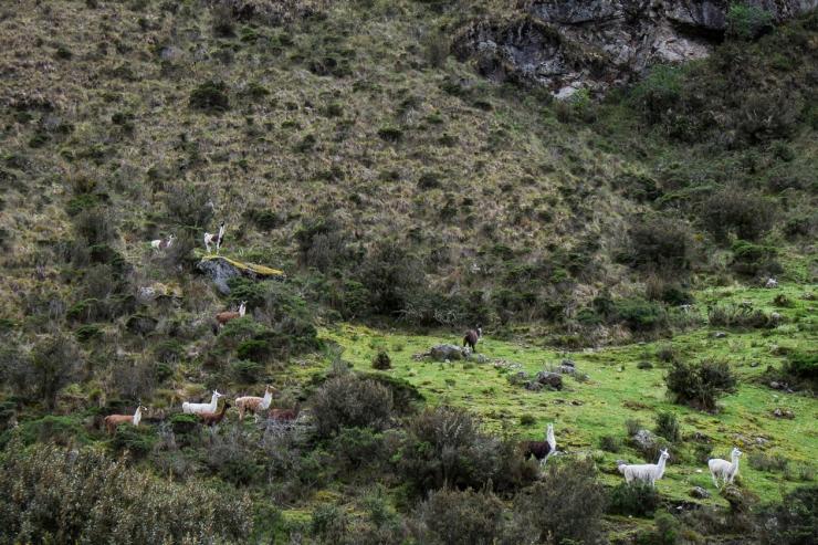 Inca Trail Day 2-3