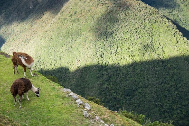 Inca Trail Day 3-22