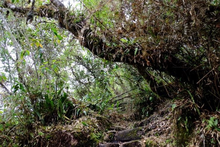 Inca Trail Day 5-21