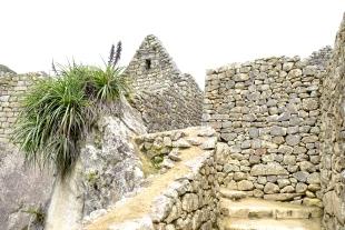 Inca Trail Day 5-49